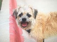 Brody's story Hi! Im Brody! I am a 2 year old terrier
