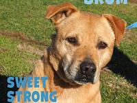 Brom's story Brom is a wonderful 11 year old boy who