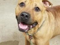 bronx's story !!! AVAILABLE for Adoption at ACCT