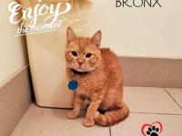 Bronx, the young cat, has just come back to rescue.