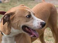 Brooke's story Brooke is a very sweet, healthy, loving