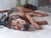 Brooks's story Brooks was saved from euthanasia at a