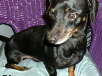 I have 2 beautiful dachshund puppies, born July 26,