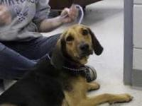 BROWNIE--URGENT!!!'s story We do not euthanize any