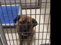 Brownie's story !!! Located at ACCT Philly, 111 W