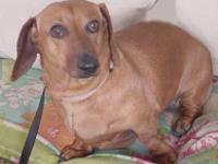 Name: Brownie  4375 Age:  8 years D.O.B.:  12/25/2009