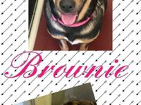 Brownie was abandoned at the shelter and is a very
