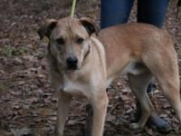 Adoption Fee: $300 Transport Fee: $160  Pickens County