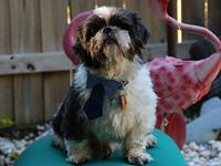 Bruce's story Im Bruce, an 8 year old male Shih Tzu