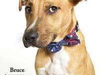 Bruce's story All dogs in the adoption program are