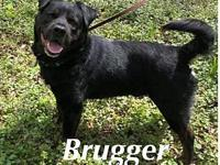Brugger's story This stately gentleman is a teddy bear