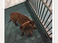 Bruiser's story Currently in kill shelter in rural