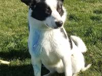 Bruno....Male Border Collie, 1 year old. Owner
