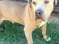 Bruno's story Meet Bruno!! Bruno is one of those dogs