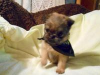 I have 2 male Brussels Griffon Puppies trying to find
