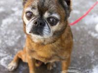 Brussels Griffon - Magoo - Small - Adult - Male - Dog