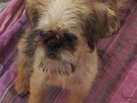 I have SIX beautiful Brussels Griffon puppies
