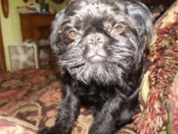 Wicket is a black rough coat. He is the great grandson