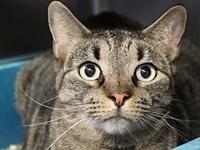 Brutus's story I came to Cat Depot because my owner had