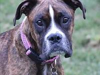 Bryn's story Bryn is a 2 year old pure bred boxer and