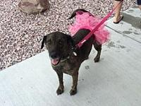 Brynn's story Brynn came to Im-Paws-Able from a
