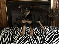 Bryson's story Very sweet playful puppy up to date on