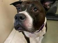 My story Hi there! I'm Bubba! I am a 10 year old pit