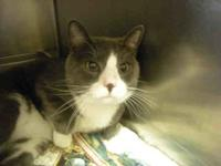 BUBBA's story Extremely friendly, outgoing, and