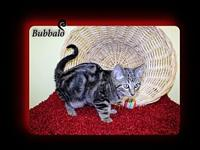 Bubbalo's story You can fill out an adoption