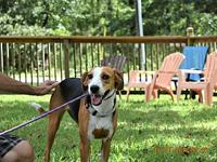 Bubbles's story Super sweet dog. Loves to play. Has
