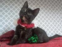 Bubbly Bubbles!'s story This sweet little kitten is a