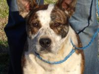 Hi! I'm Buck! I was saved from a high kill shelter on