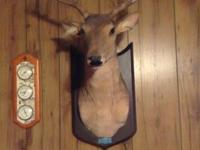 Buck The Talking Animated Singing Deer...By