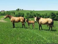 We have beautiful and well-bred horses for sale of all