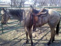 I have a nice buckskin mare for sale. She is not mine I