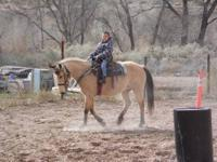 "Buttercup"" is a 14 yr old 14.1 hand Buckskin mare. she"