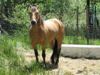 17 yr. old Buckskin Gelding Registered Quarter Horse.