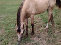 This is beautiful Buckskin colt. His going to be big.