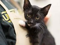 Bud's story This adorable, little kitten is playful and