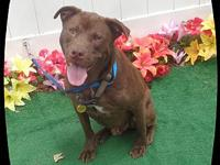 BUD's story Bud is a handsome & sweet boy brought to