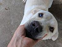 Buddy's story Say hello to Buddy! This sweet boy is a