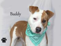 Buddy's owner was homeless so they were living in his