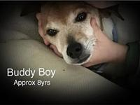 Buddy Boy's story Please complete our application at: