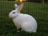 Buddy is the best rabbit I have ever met!  Buddy will