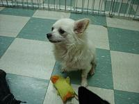 """Buddy""'s story My name is Buddy! I'm a 3-4 year old,"