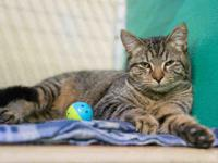 BUDDY's story Hi, I`m Buddy! Once the shyest cat in the