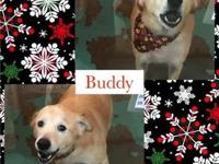 My story Hi, I'm Buddy! I'm over 4 years old, the