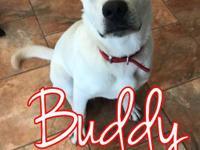 Buddy is a six-month-old lab mix boy who has so much
