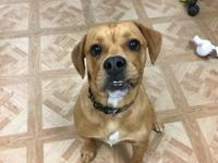 Meet Buddy! Buddy is a 7 month old puppy looking for a