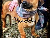 Buddy/Oxford's story Foster or Adopter needed Coming